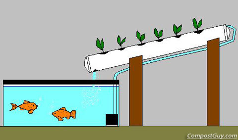DIY Aquarium Aquaponics System