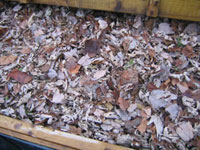 Leaves in the Worm Bin