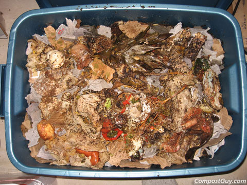 Bokashi Food Waste Added to Worm Bin
